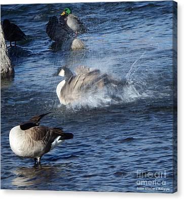 Everyone Duck Canvas Print by Bobbee Rickard