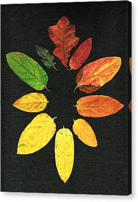 Evolution Of Autumn Bk Canvas Print by Pete Trenholm