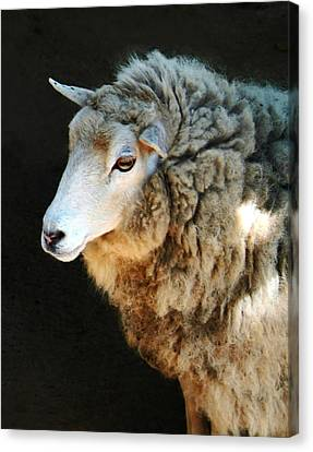 Ewe Are So Beautiful Canvas Print by Ellen Henneke