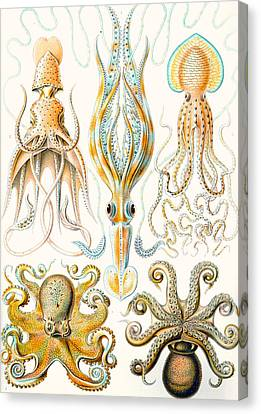 Squid Canvas Print - Examples Of Various Cephalopods by Ernst Haeckel