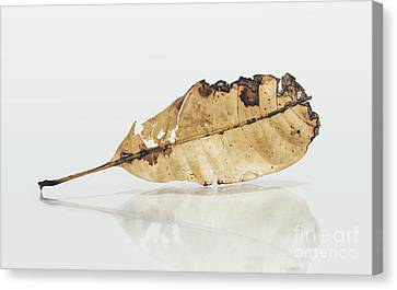 Exhibit In Defoliation Canvas Print by Jorgo Photography - Wall Art Gallery