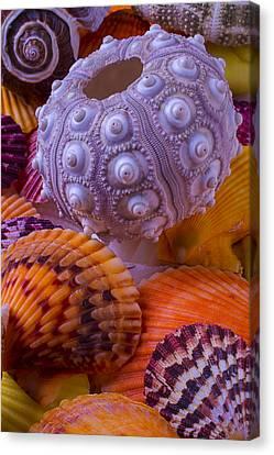 Seashell Fine Art Canvas Print - Exotic Sea Shells by Garry Gay