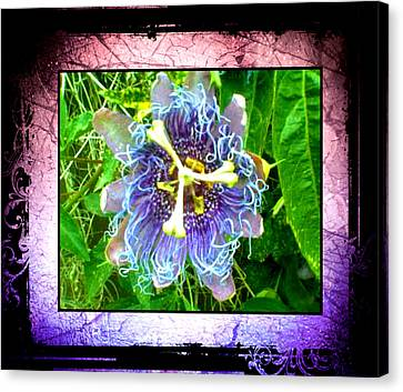Canvas Print featuring the photograph Exotic Strange Flower by Absinthe Art By Michelle LeAnn Scott