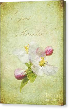 Expect Miracles Canvas Print by Kathi Mirto