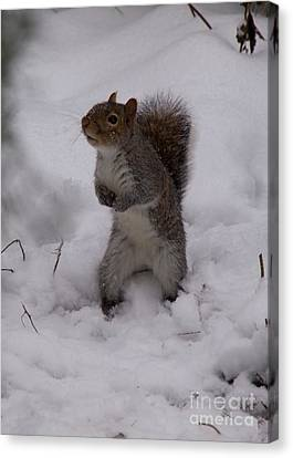 Expectant Squirrel In The Snow Canvas Print by Elizabeth Debenham