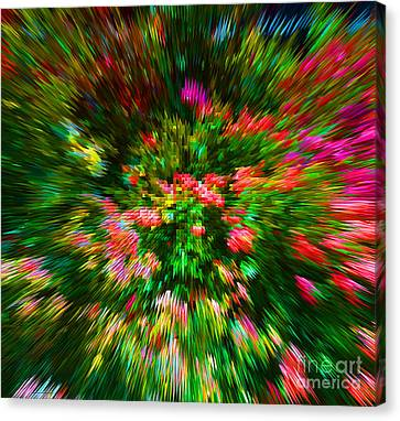 Digital Canvas Print - Exploding Roses by Alys Caviness-Gober