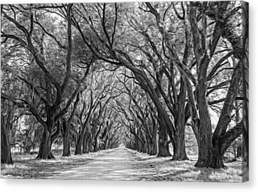 Evergreen Plantation Canvas Print - Exploring Louisiana - Oil Paint Bw by Steve Harrington