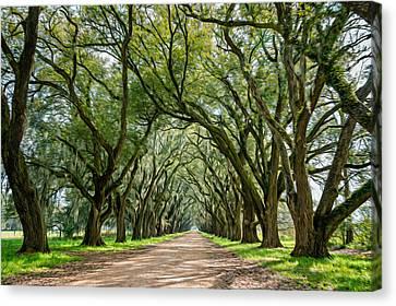 Evergreen Plantation Canvas Print - Exploring Louisiana - Oil Paint  by Steve Harrington