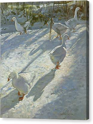 Exploring The Slope Canvas Print by Timothy Easton