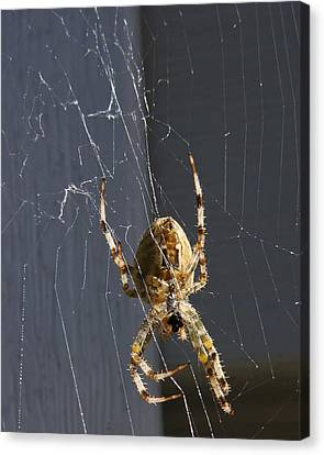 Canvas Print featuring the photograph Exploring The Web by Rhonda McDougall