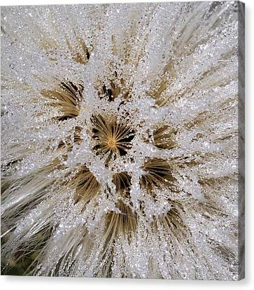 Explosion Of Jewels Canvas Print