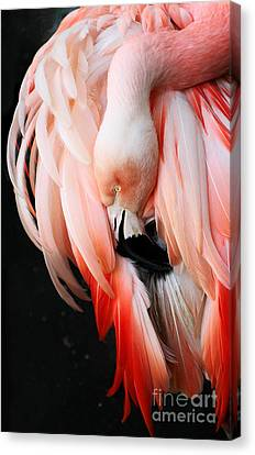 Exquisite Pink Flamingo #1 Canvas Print