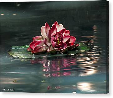 Canvas Print featuring the photograph Exquisite Water Flower  by Lucinda Walter