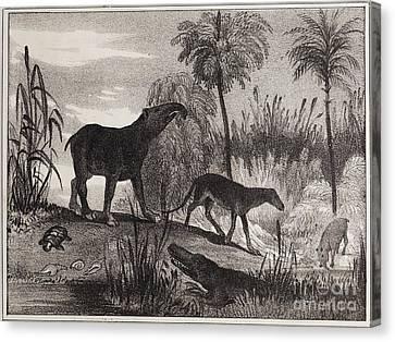Extinct Prehistoric Animals, 1837 Canvas Print by Paul D. Stewart