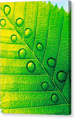 Extreme Close Up Of Leaf Vein Canvas Print by Panoramic Images