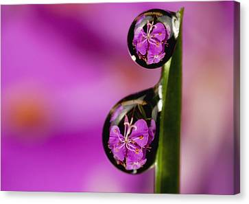 Extreme Macro View Of Fireweed Bloom Canvas Print by Marion Owen