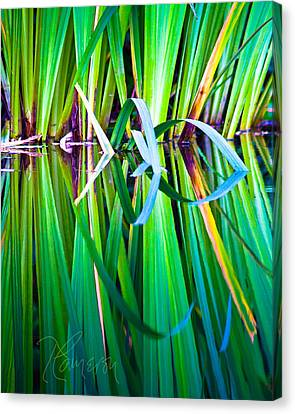Canvas Print featuring the photograph Exuberance by Tom Cameron