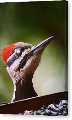 Eye Am Getting Very Sleepy Canvas Print by Kym Backland