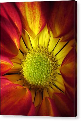 Eye Candy Canvas Print