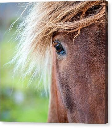Eye Of A Pony Canvas Print by Alexey Stiop