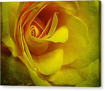 Eye Of Rose Canvas Print by Shirley Sirois