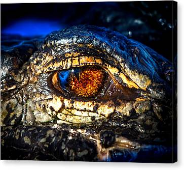 Eye Of The Apex Canvas Print by Mark Andrew Thomas