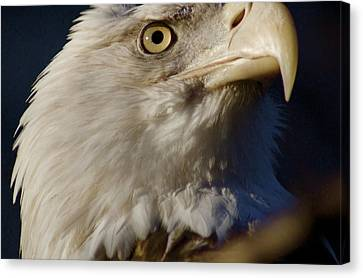 Eye Of The Eagle Canvas Print