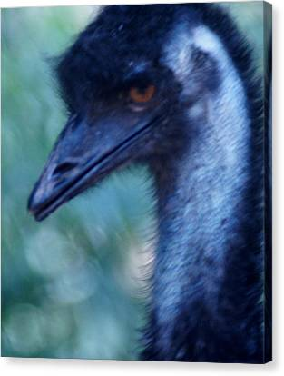 Eye Of The Emu Canvas Print by DerekTXFactor Creative