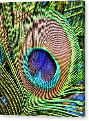 Eye Of The Feather Canvas Print