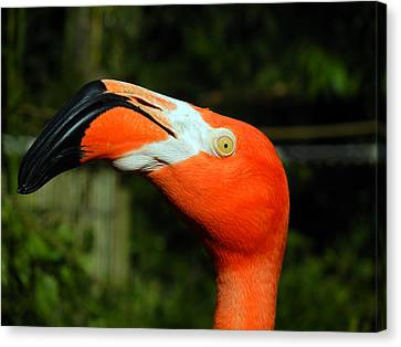 Canvas Print featuring the photograph Eye Of The Flamingo by Bill Swartwout