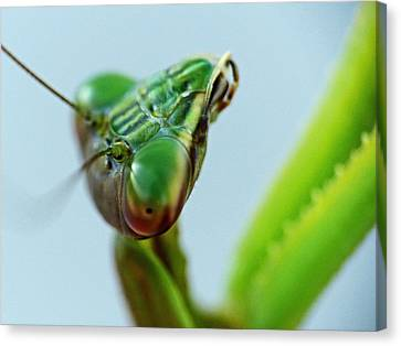 Eye Of The Mantis Canvas Print