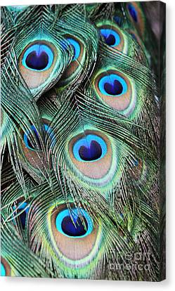 Canvas Print featuring the photograph Eye Of The Peacock #2 by Judy Whitton