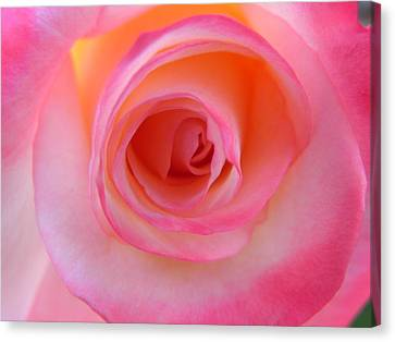 Canvas Print featuring the photograph Eye Of The Rose by Deb Halloran