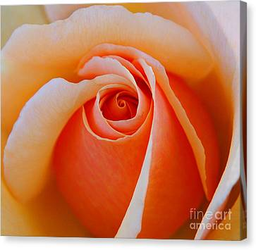 Eye Of The Rose Canvas Print