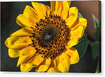Eye Of The Sun Canvas Print by Michael Moriarty