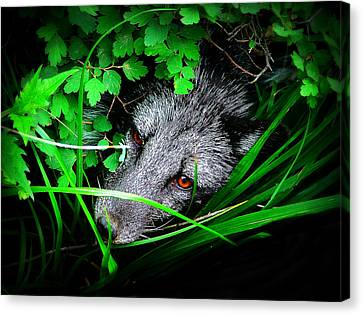 Eyes In The Bushes Canvas Print by Zinvolle Art