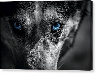 Malamute Canvas Print - Eyes In The Darkness by David Morefield