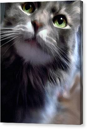 Eyes Nose Mouth Whiskers Canvas Print