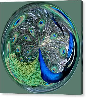 Eyes Of A Peacock Canvas Print by Cynthia Guinn
