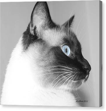 Eyes Of Blue Canvas Print by Dick Botkin