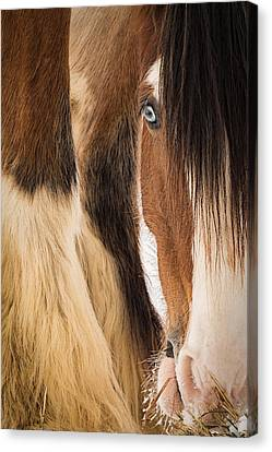 Eyes Of Blue Canvas Print by Everet Regal
