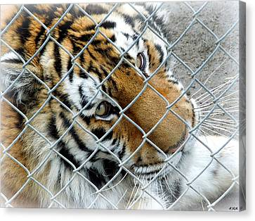 Eyes Of Captivity Canvas Print