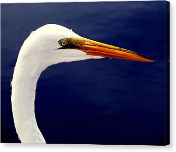 Sea Birds Canvas Print - Eyes Of Steel by Karen Wiles