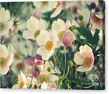 Fabulous  Anemones Canvas Print by France Laliberte