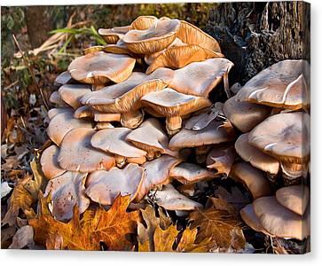 Shrooms Canvas Print - Fabulous Fungi by Kathleen Bishop