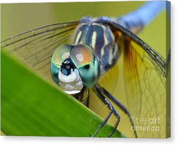 Canvas Print featuring the photograph Face Of The Dragonfly by Kathy Baccari