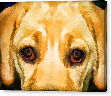Face Of Yellow Lab Canvas Print by David Letts