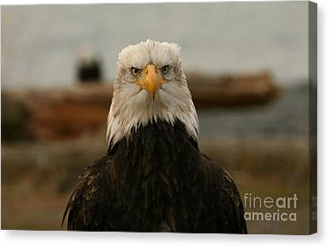 Face Off Canvas Print by Crystal Magee