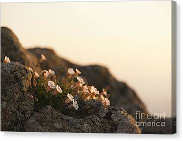 Close Focus Floral Canvas Print - Face The Light by Anne Gilbert
