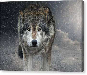 Face To Face With The Wolf Canvas Print by Joachim G Pinkawa